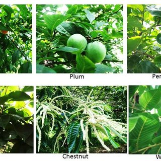 Most Common Nepal Famous Fruits