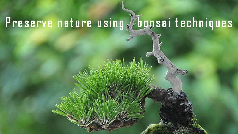 Preserve nature using bonsai techniques