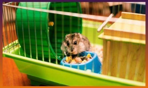 Best Hamster Foods