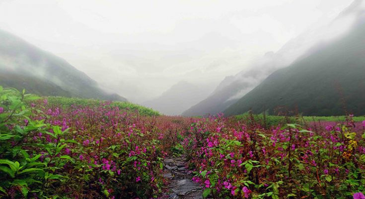 Trek to the Valley of Flowers NATIONAL PARK