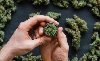 Buying the Best Flowers with a Fast Weed Delivery in Woodstock